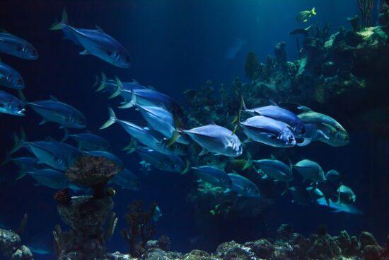 Czym żywią się ryby morskie