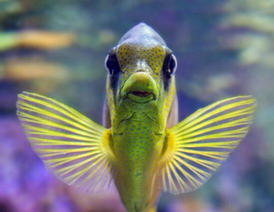 Pierwsze akwarium – co warto wiedzieć kiedy zdecydujemy się na rybki?