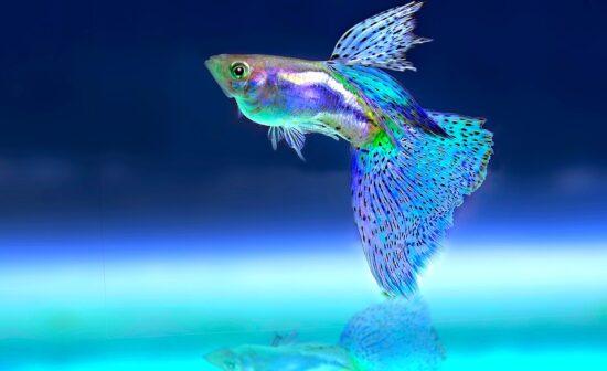 Najlepsze oświetlenie akwariowe